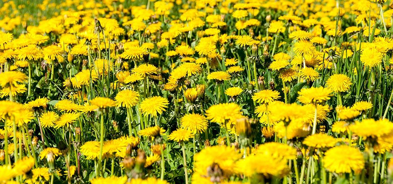fiori-estate